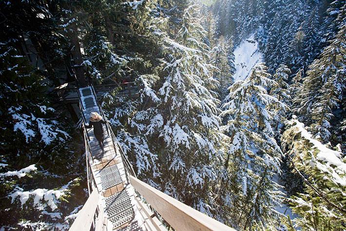 Ziptrek TreeTrek Tours, winter activities