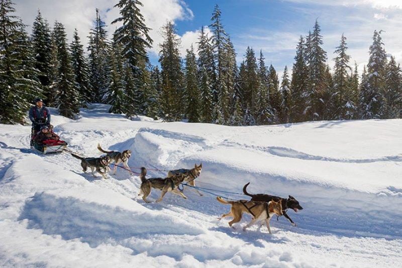 Canadian Wildrness Adventures, Dogsleding, winter activities.